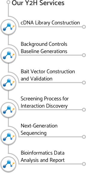 Illustration showing the work flow of next generation sequencing yeast two-hybrid screening services