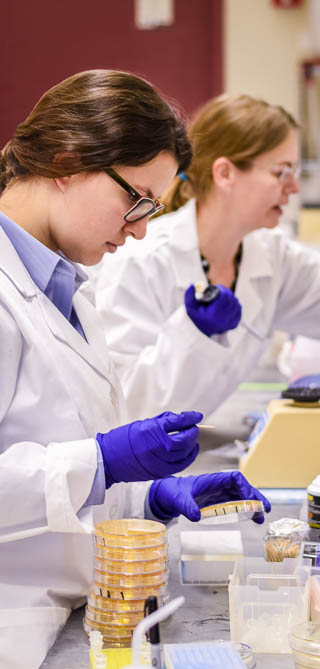 Women pipetting samples and reagents in the lab