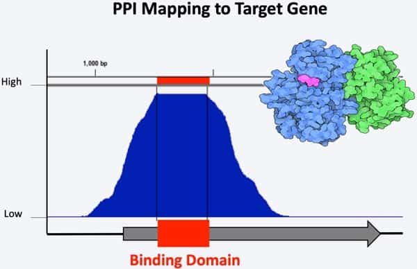 PPI Mapping with NGS-Yeast Two-Hybrid